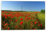 Poppies and Telegraph poles , Acrylic Print