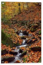 Porter Clough in Autumn                           , Acrylic Print