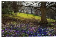 Springtime in Endcliffe Park                      , Acrylic Print