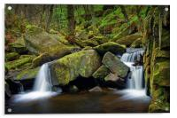 Padley Gorge in Spring                            , Acrylic Print