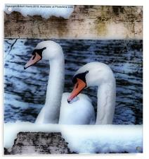 Two swans in the snow, Acrylic Print