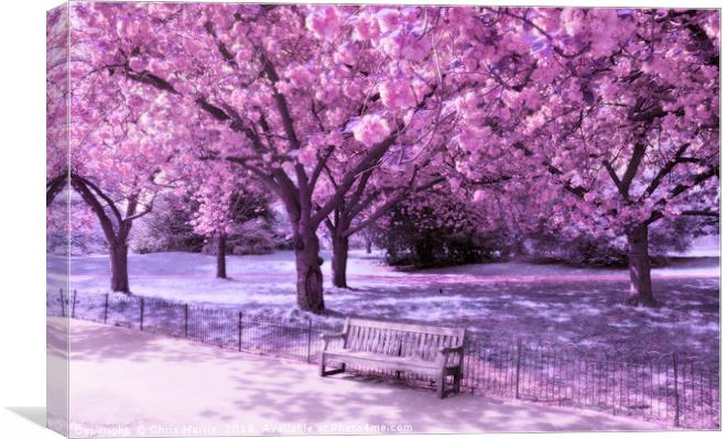Image result for blossom trees