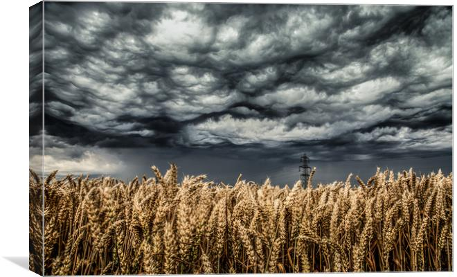 Wheat Field Thunder Storm Canvas Print By Steve Lansdell