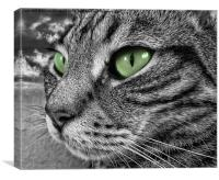 Poppys green eyes, Canvas Print