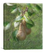 A Pair of Pears, Canvas Print