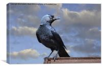Majestic Jackdaw., Canvas Print