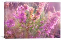 Pink Bell Heather., Canvas Print