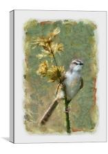 African Song Bird, Canvas Print