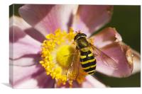 Nomad Bee Feeding, Canvas Print