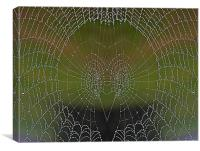 Web Face, Canvas Print
