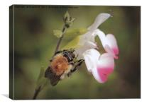 Fluffy Bee, Canvas Print