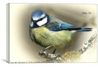 Blue Tit  7, Canvas Print