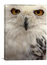 You Looking at me?, Canvas Print