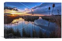 Reeds & Reflections, Canvas Print