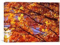 Autumn in New England, Canvas Print