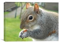 Squirrel with nuts, Canvas Print