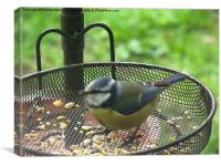 Blue Tit, Garden, Birdfeeder, Summer, Canvas Print