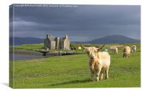 Highland cattle at Ardmore, Canvas Print