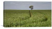 Lone Tree in a Green Landscape, Canvas Print