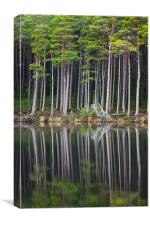 Still Loch Ancient Forest., Canvas Print