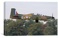 Tucano in camouflage, Canvas Print