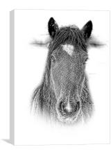 New Forest Pony n pencil by JCstudios 2015, Canvas Print