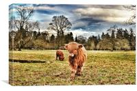 Highland cow at Glamis Castle, Canvas Print