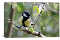 Great Tit, Canvas Print