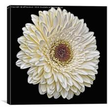 Gerbera wall art, Canvas Print