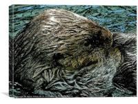 Floating Otter, Canvas Print