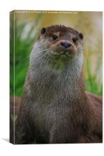 Otter ( Lutra Lutra, Canvas Print