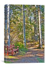 A Seat by the Trail, Canvas Print