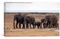 Elephant Herd, Canvas Print