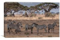 Zebras relaxing in Kenya, Canvas Print