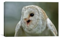 Barn Owl Chatter, Canvas Print