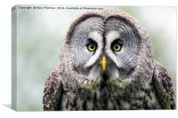 Great Grey Owl (Strix nebulosa), Canvas Print