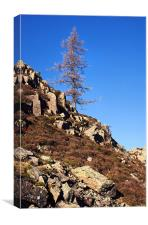 Lonesome Pine on High Rigg, Canvas Print