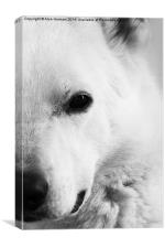 White German Shepherd, Canvas Print