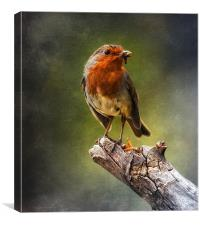 Early Bird, Canvas Print
