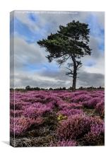 Alone In The Heather, Canvas Print