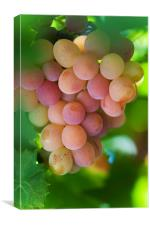 Harvest Time. Sunny Grapes, Canvas Print