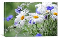 Daisies and Cornflowers                           , Canvas Print