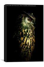 Eagle Owl Portrait, Canvas Print