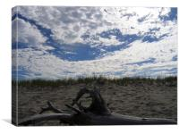 Cape Cod, Massachusetts Driftwood, Canvas Print