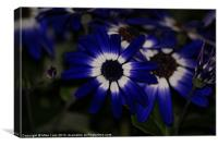 Blue daisy, Canvas Print