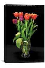 Beautiful Tulips in a glass vase, Canvas Print