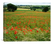 Country Summer Meadow, Canvas Print