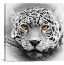 Big Cat Wall Art, Canvas Print