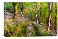 Path through the Bluebell Woods, Canvas Print