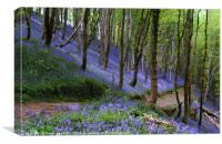 Path through the bluebell wood, Canvas Print